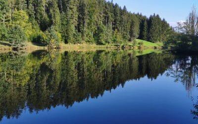 Das BEX Teamevent 2021 – Wandern und Naturidylle gemeinsam genießen